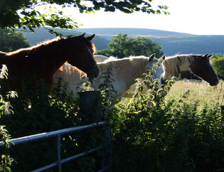 Broadley Farm horses